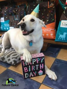 Petlover Central Birthday Dog