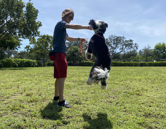 Dog jumping while working with a dog trainer