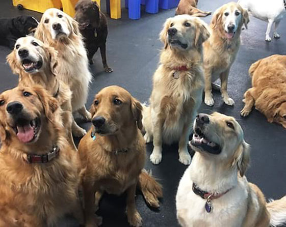 Group of dogs in daycare