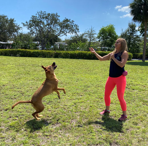 Dog trainer teaching a dog to jump