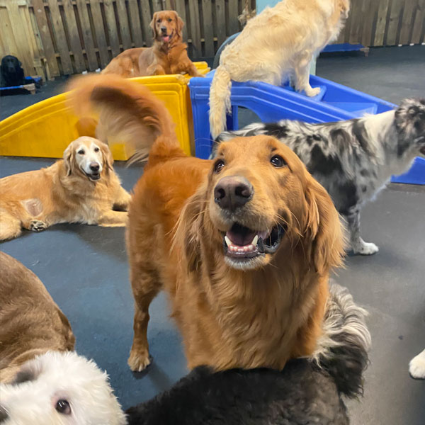 Dogs in the play room